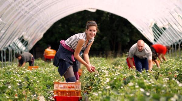 Як знайти сезонну роботу за кордоном